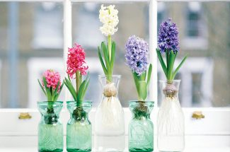 home care tips how to choose fragrance for your home