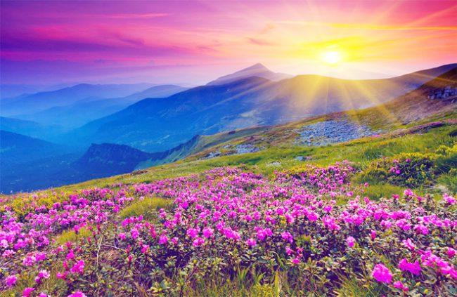 flowers-national-park